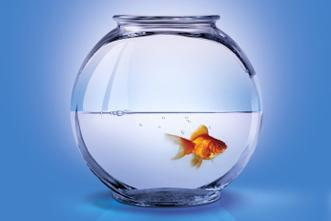View article Are You An Aquarium-Keeping Leader?