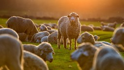 View article Diagnosing Sheep