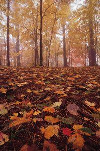 media Autumn Forest Floor