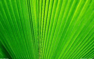 media Palm Frond Close